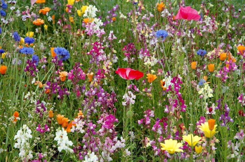 Free Wild Flower Seeds Friends Of Rowley Fields